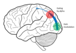 Paper accepted in Human Brain Mapping