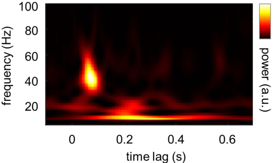 Paper by Alex Zhigalov published in  PLoS Computational Biology